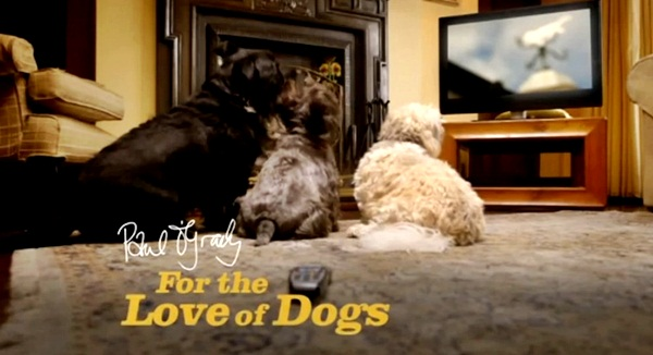 paul-o-grady-for-the-love-of-dogs