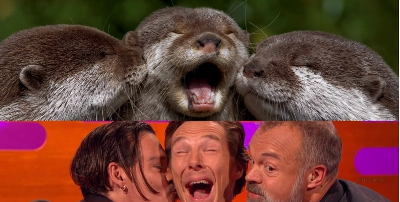 benedict cumberbatch graham norton johnny depp otters