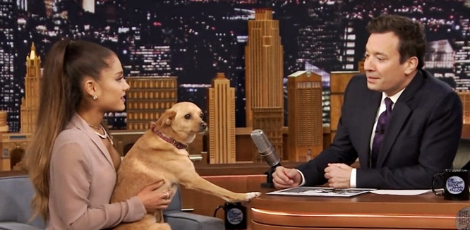 ariana grande dog toulouse on jimmy fallon