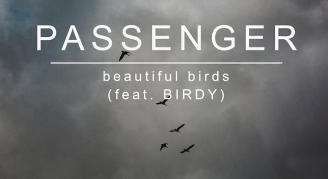 passenger-beautiful-birds-birdy