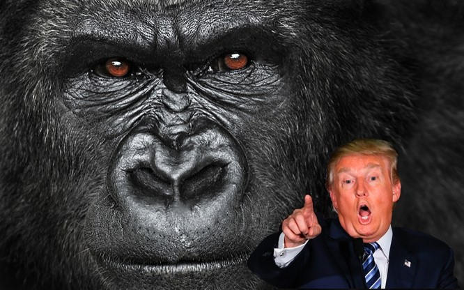 Donald Trump may not watch The Gorilla Channel, but Vice made sure you can