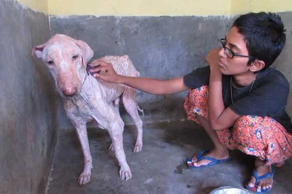 Animal Aid India is one of world's most successful animal rescue and rehabilitation organizations